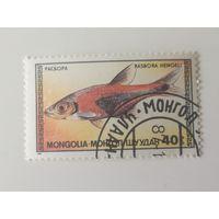 Монголия 1987. Аквариумные рыбки.