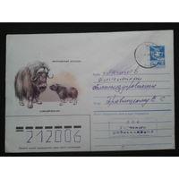 1985 овцебык прошло почту