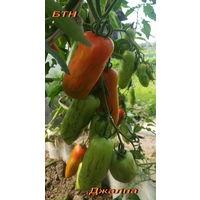Семена томата Джалпа