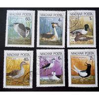 Венгрия 1980 г. Утки. Птицы. Фауна, полная серия из 6 марок #0238-Ф1P54