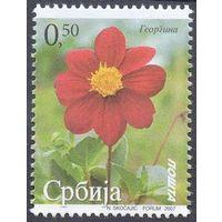 Сербия георгина цветы