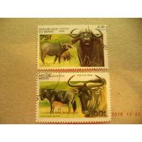 Бенин, фауна