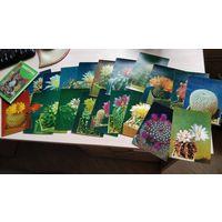Кактусы - набор открыток в количестве 20 штук