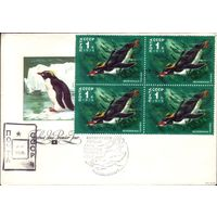 1978 год КПД с провизорием Пингвины 2