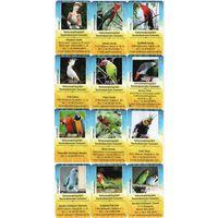 Карманные календарики Венгрии-попугаи,12 шт,2020