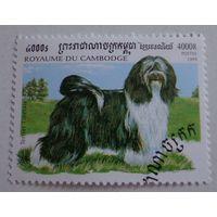 Камбоджа.1999.тибетский терьер