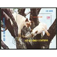 Кошки. Экваториальная Гвинея 1978. Блок. Гаш.