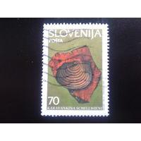 Словения 1995 ископаемый моллюск