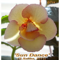 Ахименес 'Sun Dance' (S.Saliba, 2012)