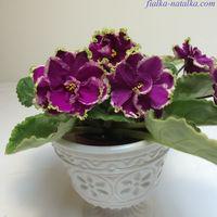 Фиалка ЕК-Малахитовая Орхидея (детка с фото)