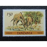 Танзания. Фауна.