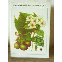 Книга Культурные растения СССР