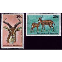 2 марки 1975 год Руанда Антилопы 673-674