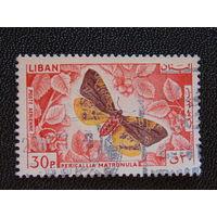 Ливан. Бабочки.