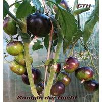 Семена томата Королева Ночи (Konigin der Nacht)