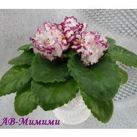 Фиалка АВ-Мимими (детка с фото)