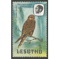 Лесото. Большая пустельга. 1981г. Mi#310.