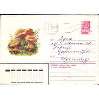 1979 год ХМК Лисички 79-484 2