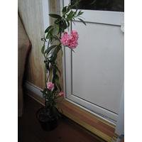 Растения цветочки от 1,5 руб.