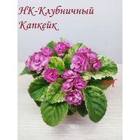Фиалка НК-Клубничный Капкейк 2017  полумини - - св. лист