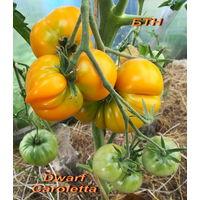 Семена томата Dwarf Caroletta