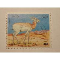 Алжир 1992г. фауна