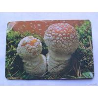Карманные календарики.  мухаморы 1991г.  распродажа