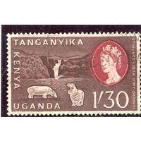 Кения - Уганда. Фауна. Бегемот