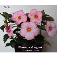 Ахименес Fallen Angel (S.Saliba, 2010