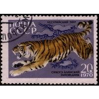 Кошки. СССР. 1970. Тигр. Зуб. (#3919) Марка из серии. Гаш.