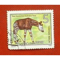 ГДР. Фауна. ( 1 марка ) 1980 года. 2-7.