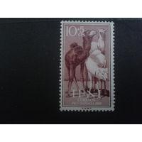 Ифни 1960 Колония Испании верблюды
