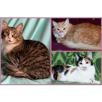 Молодые стерилизованные / кастрированные котики (9 месяцев) в дар