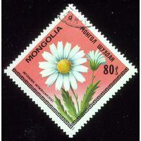 1 марка 1979 год Монголия Ромашка 1213