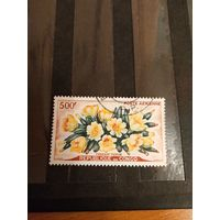 1964 Конго флора цветы дорогая концовка авиапочта (5-6)