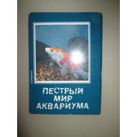 Набор открыток Пестрый мир аквариума Выпуск 5 карповые