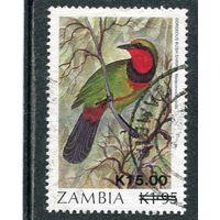 Замбия. Фауна. Кустарниковый сорокопут. Надпечатка