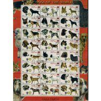 Восточный Тимор, 2000г. собаки, 96шт. 4 листа