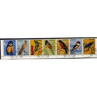 Парагвай 1983г. птицы. 7м. сцепка