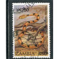 Замбия. Фауна. Кошачья змея. Надпечатка