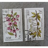 Флора DDR