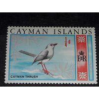 Каймановы острова 1969  Фауна Дрозд  чистая марка