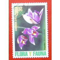 Куба. Флора. ( 1 марка ) 2010 года.