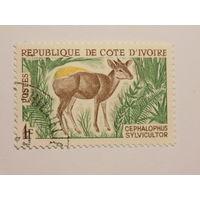 Кот- д Ивуар.  Фауна.