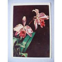 Ковригин В.(фото), Орхидея; 1958, чистая.