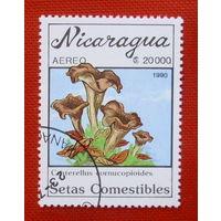 Никарагуа. Грибы. ( 1 марка ) 1990 года.
