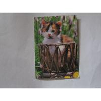 Карманный календарик котенок
