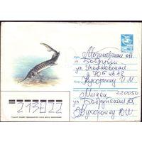 1985 год ХМК А.Исаков Севрюга 85-565