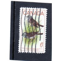 Канада.Ми-438.Белозернистый воробей (Zonotrichia albicollis). Серия: Птицы 1969.