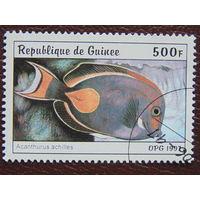Гвинея 1997г. Фауна.